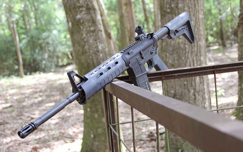 Grey Colt 6920 On Fence